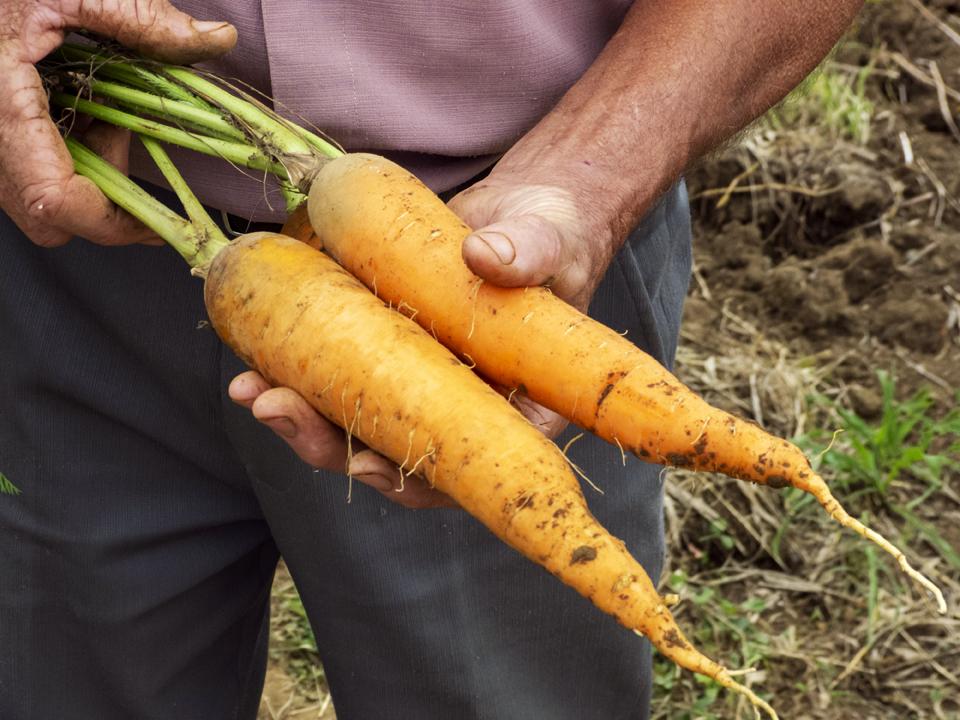 produto organico alimentacao